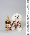 สุนัขสีขาวแต่งกายด้วยคาโดมัตสึและเสื้อผ้าที่ใส 35529530