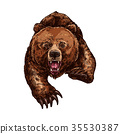 bear, grizzly, animal 35530387