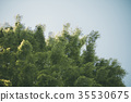 green 35530675