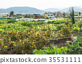 시마네, 농장, 가을 35531111
