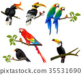 all birds colorfull set on tree 35531690
