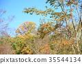 가을의 공원 백일홍 단풍 35544134