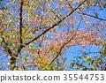 autumn, autumnal, foliage 35544753