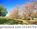 autumn, autumnal, foliage 35544756