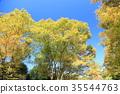 가을의 공원 물드는 느티 나무 35544763