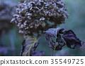 잎, 식물, 꽃 35549725