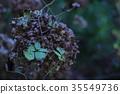 잎, 식물, 꽃 35549736