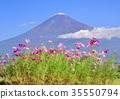 ภูเขาฟูจิ,ภูเขาไฟฟูจิ,ดอกไม้ 35550794