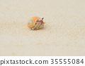 陸寄居蟹 寄生蟹 寄居蟹 35555084