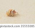 陸寄居蟹 寄生蟹 寄居蟹 35555085
