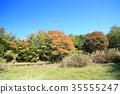 가을의 공원 35555247