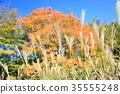 가을의 공원 억새 화수 35555248
