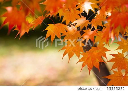潮濕的樹葉 35555272