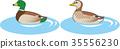 鳥兒 鳥 野生鳥類 35556230