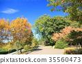 가을의 공원 물드는 나무 35560473