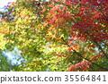 가을의 공원 단풍 단풍 35564841