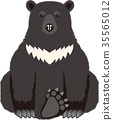 asian black bear, bear, bears 35565012
