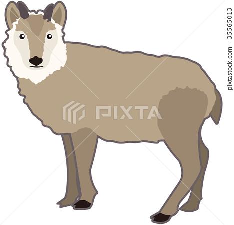 日本髭羚 鬣羚 動物 35565013