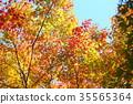 가을의 공원 단풍 단풍 35565364