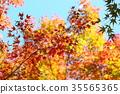 가을의 공원 단풍 단풍 35565365