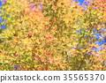 가을의 공원 단풍 단풍 35565370
