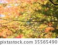 가을의 공원 단풍 단풍 35565490