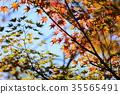 가을의 공원 단풍 단풍 35565491