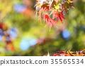 가을의 공원 단풍 단풍 35565534