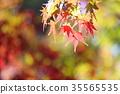 가을의 공원 단풍 단풍 35565535