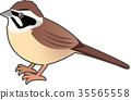 조류, 새, 작은 새 35565558