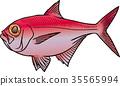鱼 咸水鱼 海水鱼 35565994