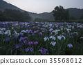 lake kagurame, iris, iris garden 35568612