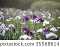 iris, bloom, blossom 35568614