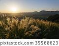 aso, japanese pampas grass, autumnal 35568623