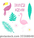 flamingo, palm, bird 35568648