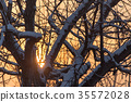 bare branches of a tree in the sun dawn 35572028