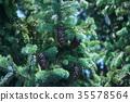 잎, 솔방울, 과일 35578564
