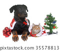 cat, dog and christmas 35578813