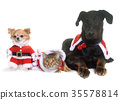 cat, dogs and christmas 35578814