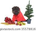 dressed puppy german shepherd 35578816