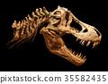 Skeleton of Tyrannosaurus rex ( T-rex ) 35582435