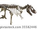 Tyrannosaurus Rex skeleton on isolated background 35582446