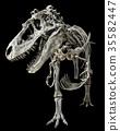 Tyrannosaurus Rex skeleton on isolated background 35582447