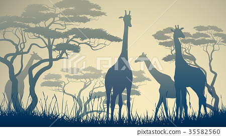 Illustration of wild giraffes in African savanna. 35582560