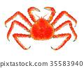 红王蟹 水彩 水彩画 35583940