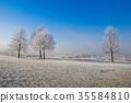霜 树木 树 35584810