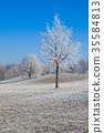 霜 树木 树 35584813