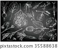 Hand Drawn of Leafy and Salad Vegetable 35588638