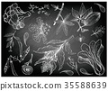 Hand Drawn of Leafy and Salad Vegetable 35588639