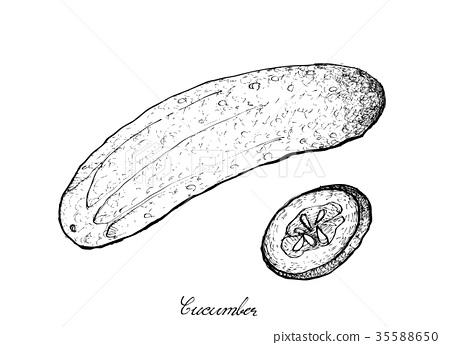 Fresh Green Cucumber on White Background 35588650